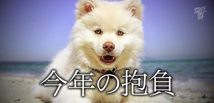 gesubaka_332_kotoshino.jpg